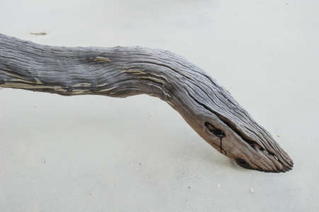Close up of Driftwood on the beach photo