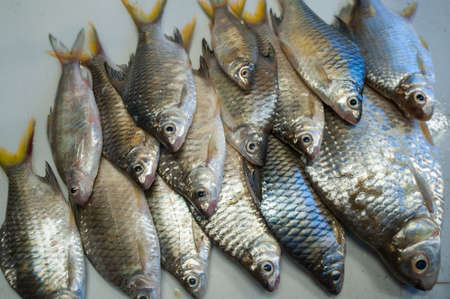 fishery products: fresh snappers at the local market Stock Photo