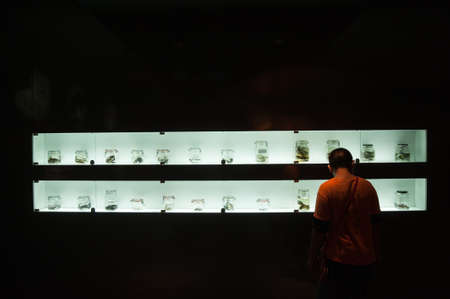 fossil record: Collection of preserved reptiles and bones in Musium