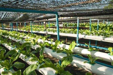Vert bio, la culture hydroponique de culture de l�gumes � la ferme
