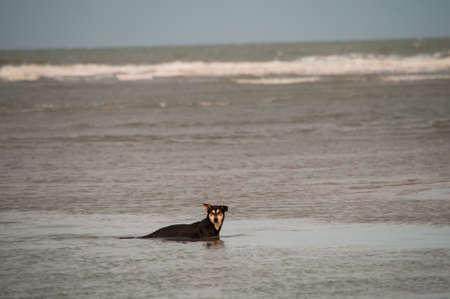 Chien nager dans la mer Banque d'images