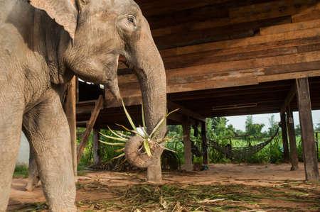 surin: Elephant Village (Study Center) Surin Thailand