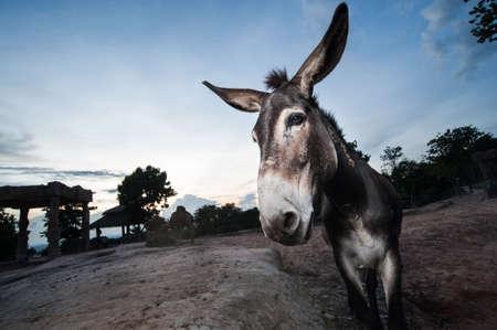 Closeup of a donkey on the zoo photo