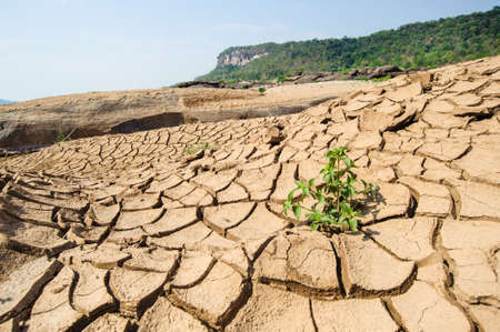 Dried river bed with a small green plants Stock Photo