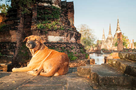 Chien dans le vieux temple, Ayutthaya, Thaïlande