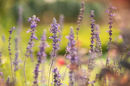Flower and garden, natural green background