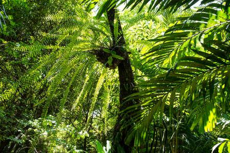 tropical garden: Tropical Garden Stock Photo