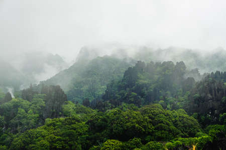 Fog covers distant trees on a limestone mountain side, Laos