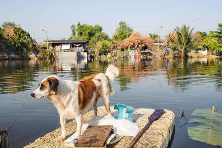 Chien convoyé à la sécurité sur un article Inondé de Road à Bangkok