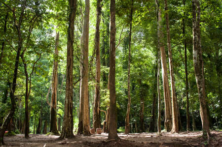 large tree: Big tree in forest. Green life background Stock Photo