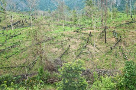 Vernietigd tropisch regenwoud in Laos.
