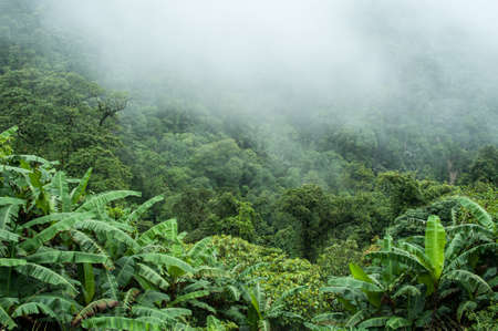 The tropical rain forest on rainy in the morning.