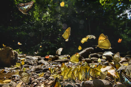 Butterflies in tropical forest. Thailand