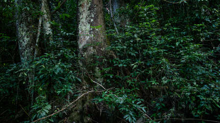 A scene looking straight into a dense tropical rain forest, taken in Thailand.