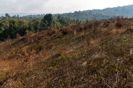 Burned forest after fire in Khao Yai National Park, Thailand