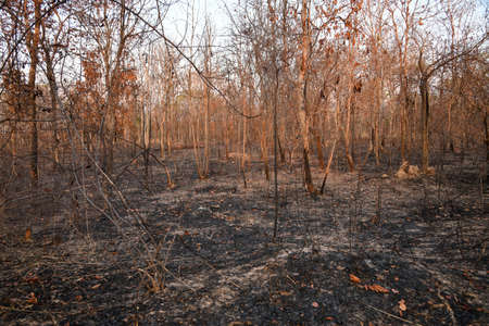 In the North and Northeast bushfires have been known as a seasonal problem for over a decade, and land-clearing for agriculture has been blamed as the cause. 写真素材