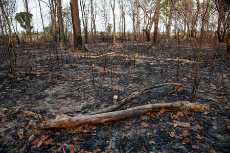 In the North and Northeast bushfires have been known as a seasonal problem for over a decade, and land-clearing for agriculture has been blamed as the cause. Stock Photo