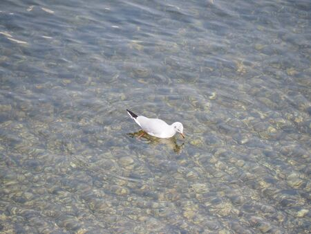 seabird: seagull seabird photography in yokohama Stock Photo