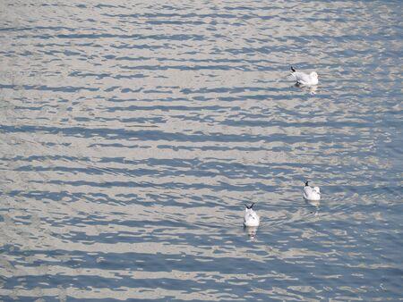seabird: seagulls seabird photography in yokohama