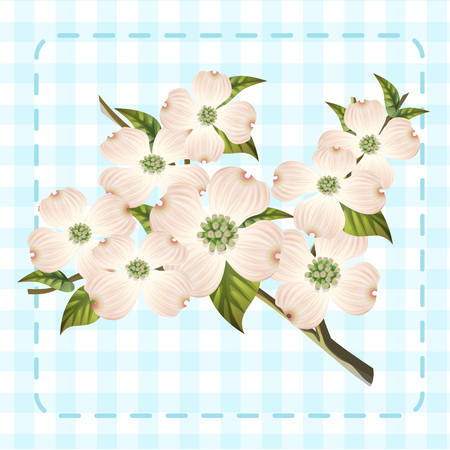 pink dogwhite wood cornus hanamizuki flower illustration vector