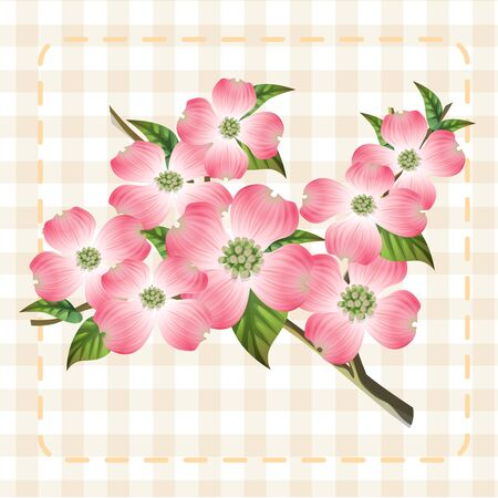 pink dogwood cornus hanamizuki flower illustration vector