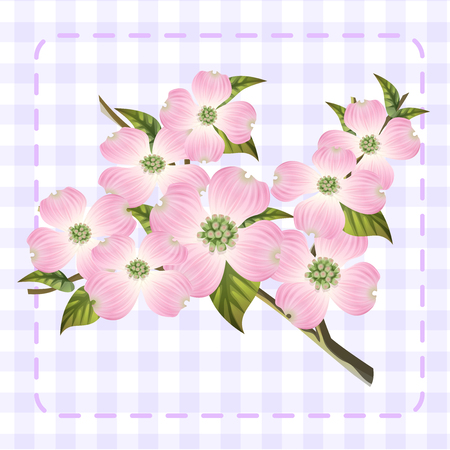 white pink dogwood cornus hanamizuki flower illustration vector  イラスト・ベクター素材