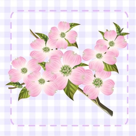 white pink dogwood cornus hanamizuki flower illustration vector Illustration