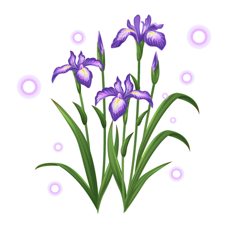 violet iris ayame flower illustration vector