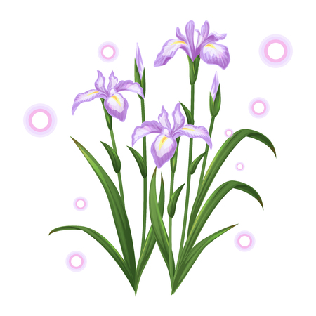 white violet iris ayame flower illustration vector