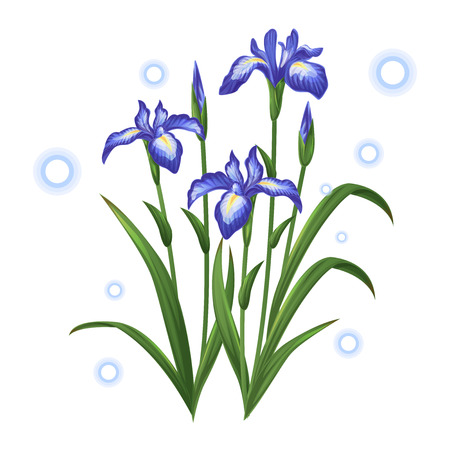blue violet iris ayame flower illustration vector