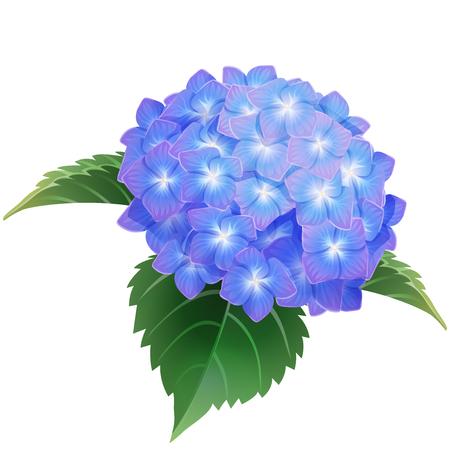blue hydrangea ajisai flower illustration vector