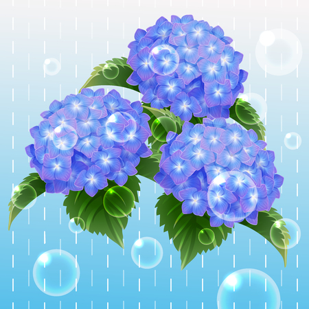 all blue hydrangea ajisai flower illustration vector  イラスト・ベクター素材