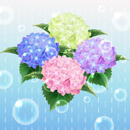 4 colour hydrangea ajisai flower illustration vector