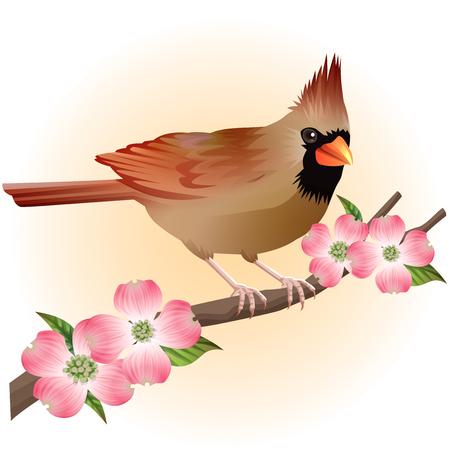 brown cardinal bird and dogwood illustration vector Иллюстрация