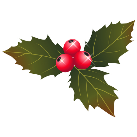 holly berry: holly berry christmas  illustration vector