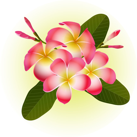 red Frangipani Plumeria tropical flower illustration vector