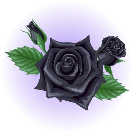 noir, rose, fleur illustration