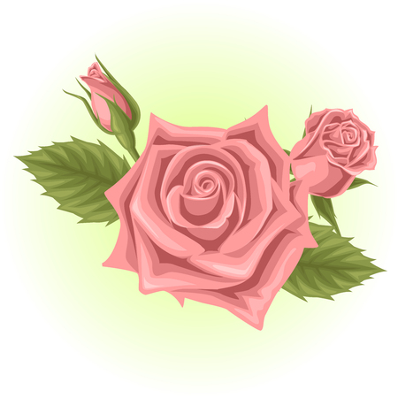 pink rose flower illustration