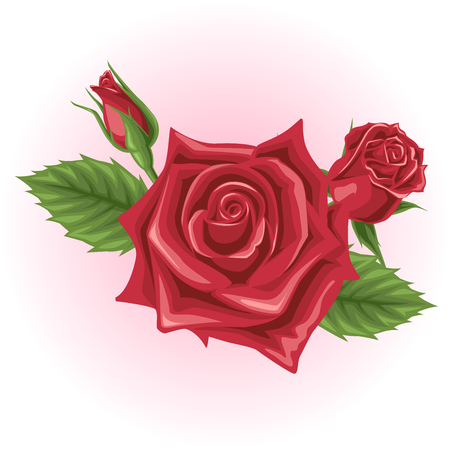 red rose: red rose flower illustration
