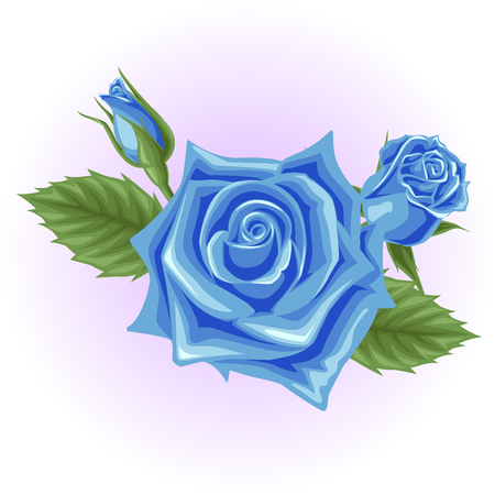 blue rose flower illustration  イラスト・ベクター素材