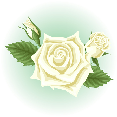 white rose flower illustration  イラスト・ベクター素材