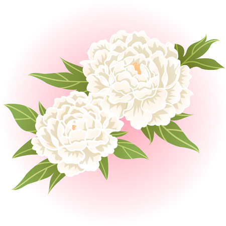 white peony flower illustration  イラスト・ベクター素材