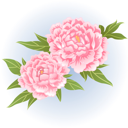 pink peony flower illustration  イラスト・ベクター素材