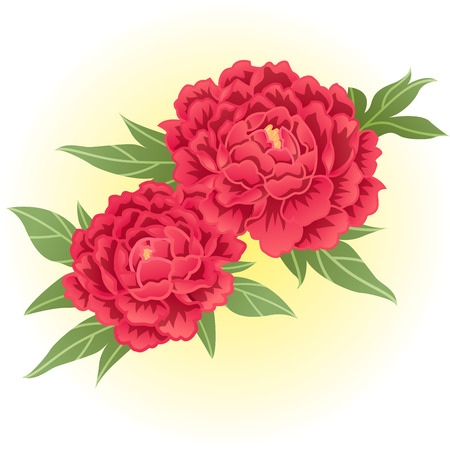 red peony flower illustration  イラスト・ベクター素材