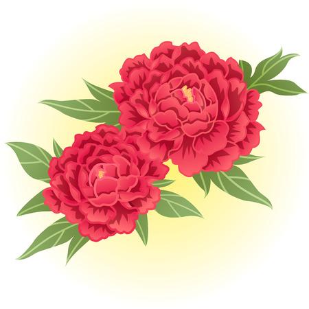 red peony flower illustration Stock Illustratie