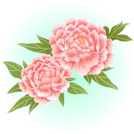 old rose pink peony flower illustration  イラスト・ベクター素材