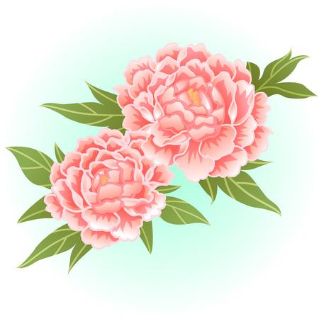 old rose pink peony flower illustration Illustration