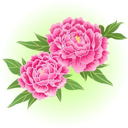 deep pink peony flower illustration  イラスト・ベクター素材