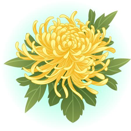 yellow chrysanthemum flower illustration Vectores