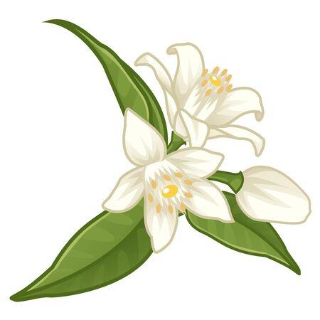 white citrus  flower illustration vector